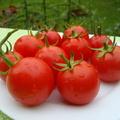 5+1 tipp paradicsomneveléshez - I. rész: ültetés