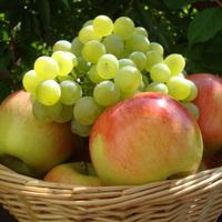 Alma és szőlő a kiskertből