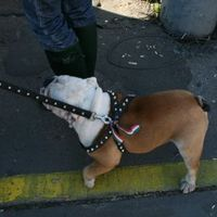 A forradalom kutyái 2.