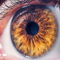 Tíz érdekesség a szemről