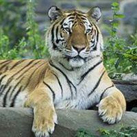 Állatok védése, védett állatok