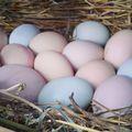 Színes tojáshéj
