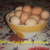 A tojás - Melyik tyúkod tojik?