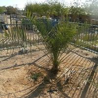 Ősnövények újratöltve