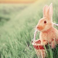 Öt meglepő tény a húsvéti nyúlról