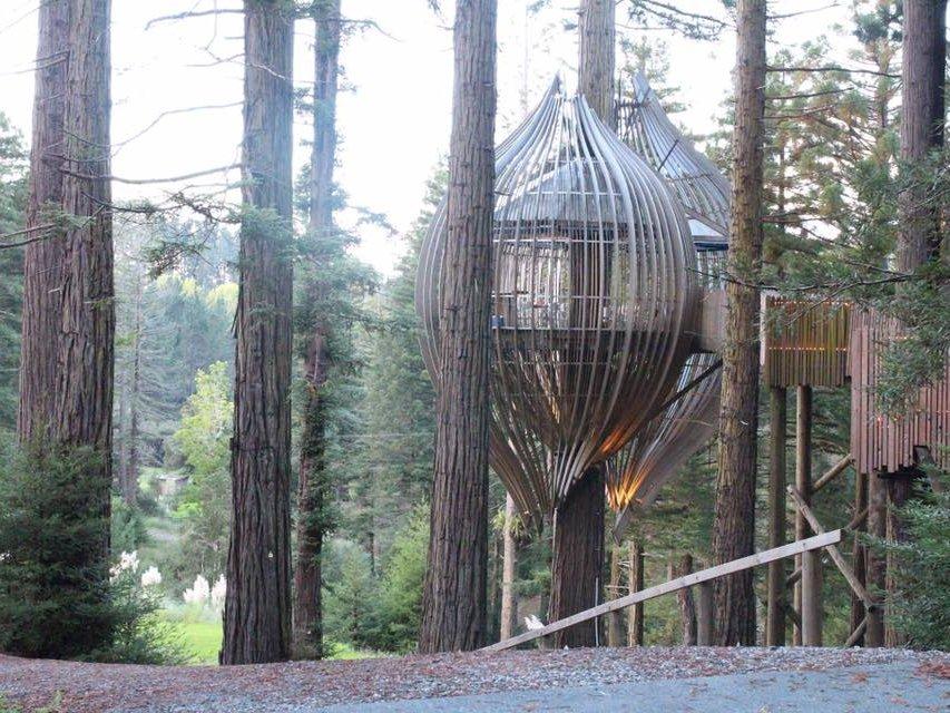 3_redwoods_treehouse.jpg
