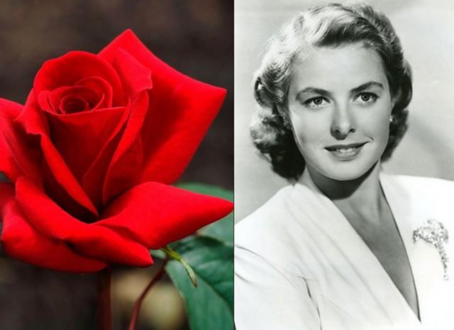 Ingrid Bergman.jpg