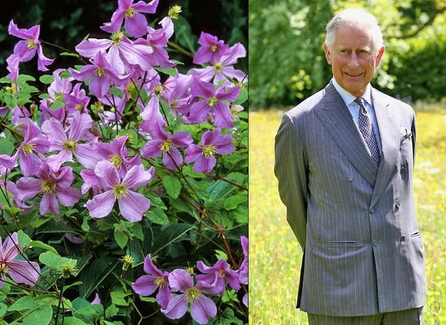 Károly herceg.jpg