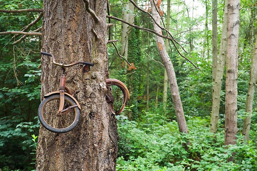 A biciklievő fa...
