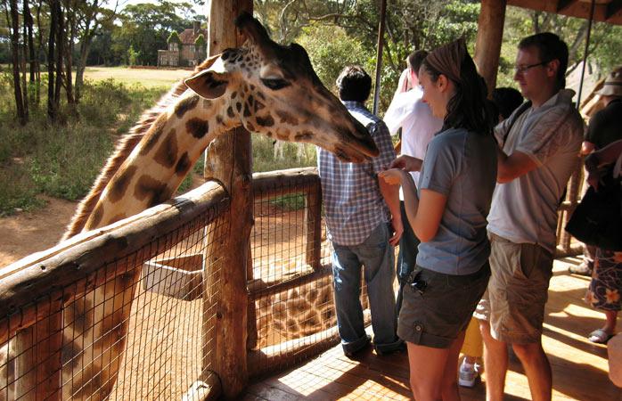 giraffe_manor.jpg