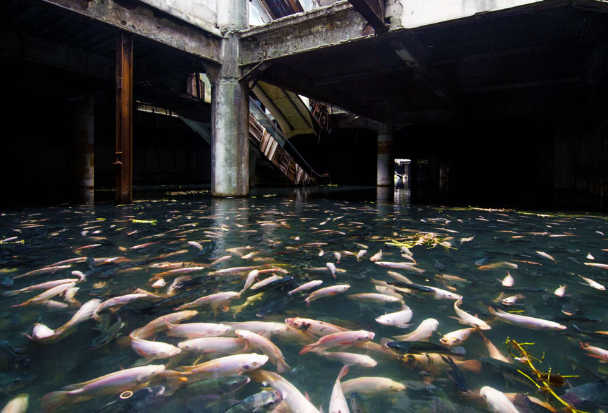 A halak meghódította bangkoki bevásárlóközpont