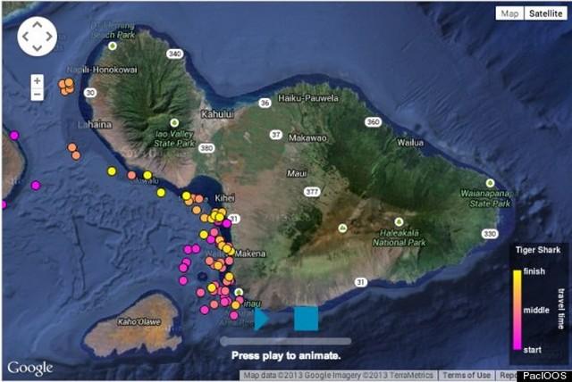 térkép_cápa.jpg