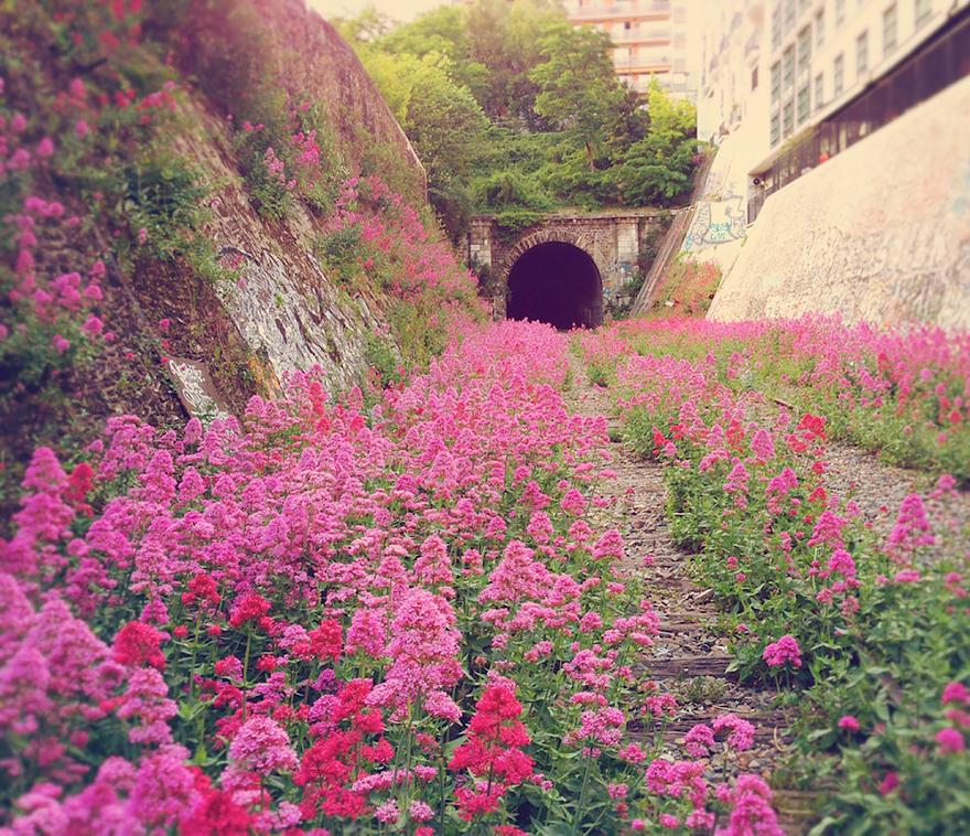 virágos rétté változott sínpár, Párizs.jpg