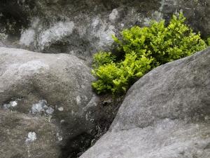 zöld a kövek között.jpg