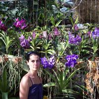 Nong Nooch, Thaiföld - orchideák lila színben