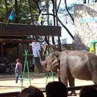 Nong Nooch, Thaiföld - hogy fest egy elefánt?