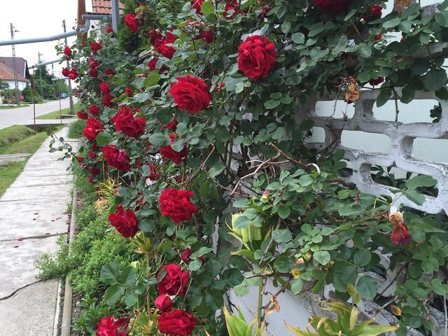 Village of roses