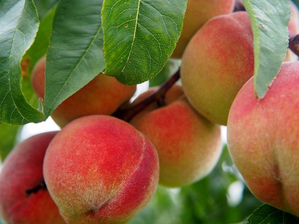 peach-2632182_960_720.jpg