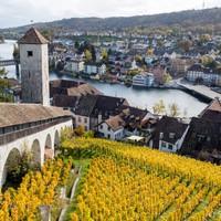 Egy svájci város, ahol az órák mellett tokaji szőlőfajták is teremnek