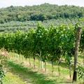Őszi úti tippek a szőlő jegyében