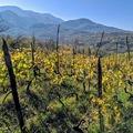 A grúz borokkal egyet tehetünk, megisszuk