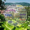 19 mindent elmondó jelző Grazról