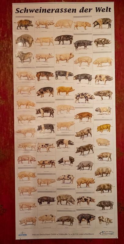 6_schweinerassen.jpg