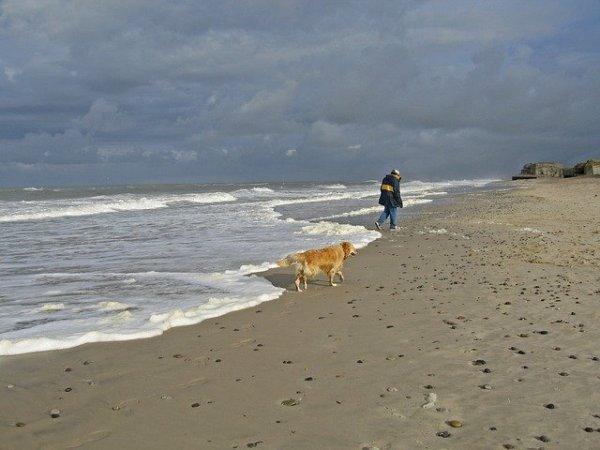 coast-938114_640