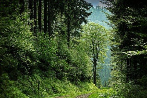 black_forest_1836694_640_600x399.jpg