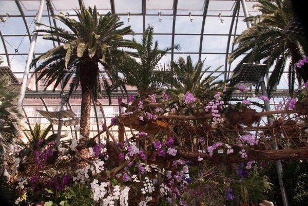 Orchideak1_kicsik_600x401.jpg