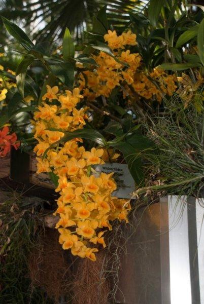 Orchideak2_kicsik_402x600.jpg