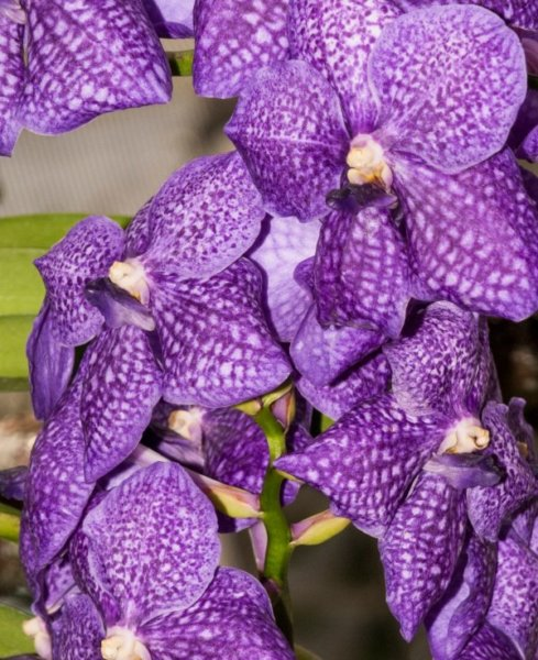 Orchideak8_kicsik_489x600.jpg