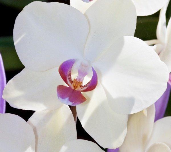 Orchideak9_kicsik_600x531.jpg