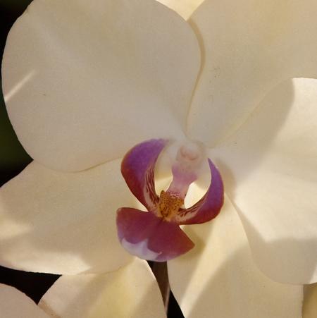 orchideanő.jpg