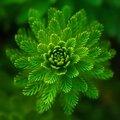 Így hat rád a természet színe, a zöld