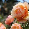 Finom, lágy, nőies: a világos tavasz (tavasz-nyár) színtípus