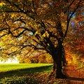 Erdei tündér akcióban: a meleg ősz (ősz-tavasz) színtípus