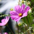 Bájos, hűvös pasztellek: a világos nyár (nyár-tavasz) színtípus