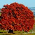 Mély, tüzes és ünnepélyes: a sötét ősz (ősz-tél) színtípus