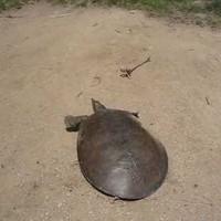 méghogy a teknősök lassúak