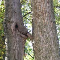 furcsa fák