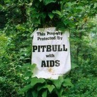 a legjobb házörző - pitbull with aids