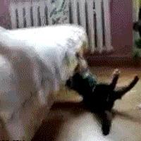 macsek jump fail