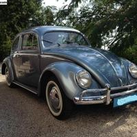 Szeky's Oval window bug on eBay