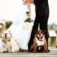 Esküvői inspirációk kutyás pároknak