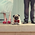 Kutyák esküvőn alkalomhoz illően öltözve