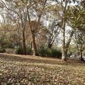 Városligeti fák novemberi ragyogásban