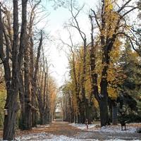Sétáljon élő növénykertben Sopron belvárosában