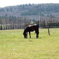 Elfeledett lóversenypálya, ahol még Kincsem is futott