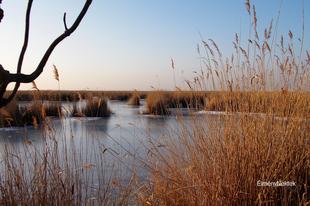 Titokzatosságok a Fertő-tó életéből